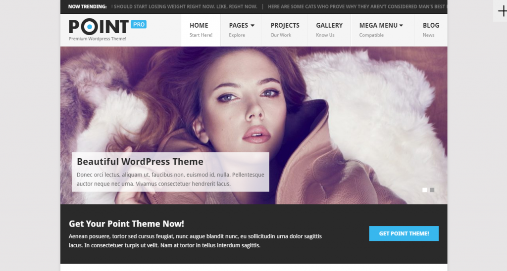 point-pro-wp-theme